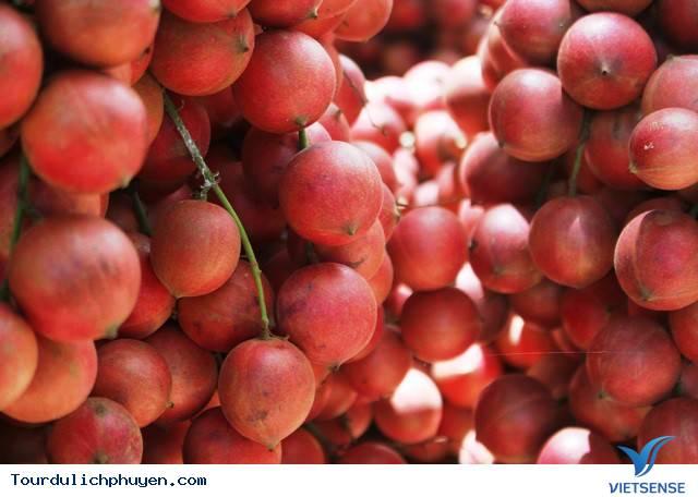 Bạn có biết cây đỏ chín ở trên Cao Nguyên Vân Hòa, Phú Yên là cây gì không - Ảnh 3