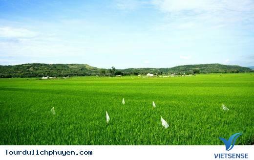 Đến Phú Yên Đi TÌm Vùng Đất Hoa Vàng, Cỏ Xanh Đẹp Như Trong Phim