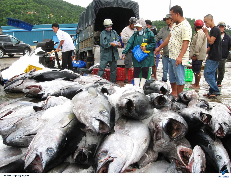 Nhật Bản tiến hành thu mua, chế biến cá ngừ đại dương