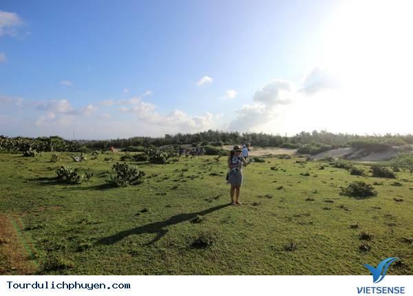 Thảo Nguyên Xương Rồng – Cảnh Đồng Bất Tận Bát Ngát Trên Đất Phú Yên